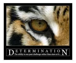 Determination - Tiger's Eye
