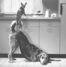 Trust (Dogs at Sink)